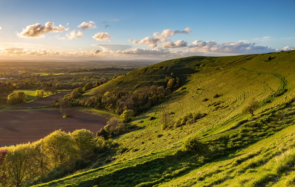 Evening Light, Hambledon Hill